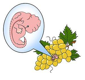 Занятие сексом на восьмой недели беремеменности
