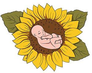 беременности растет жир на животе